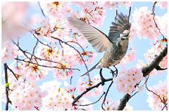 birdandcheeryblossoms
